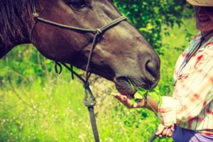Equine Therapy for drug and alcohol rehabilitation